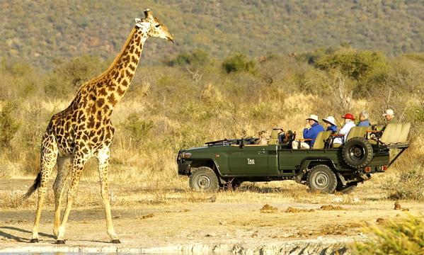 Big game, up close and personal, at Tau Game Lodge, in Madikwe, near the Botswana border. IRT Photo.