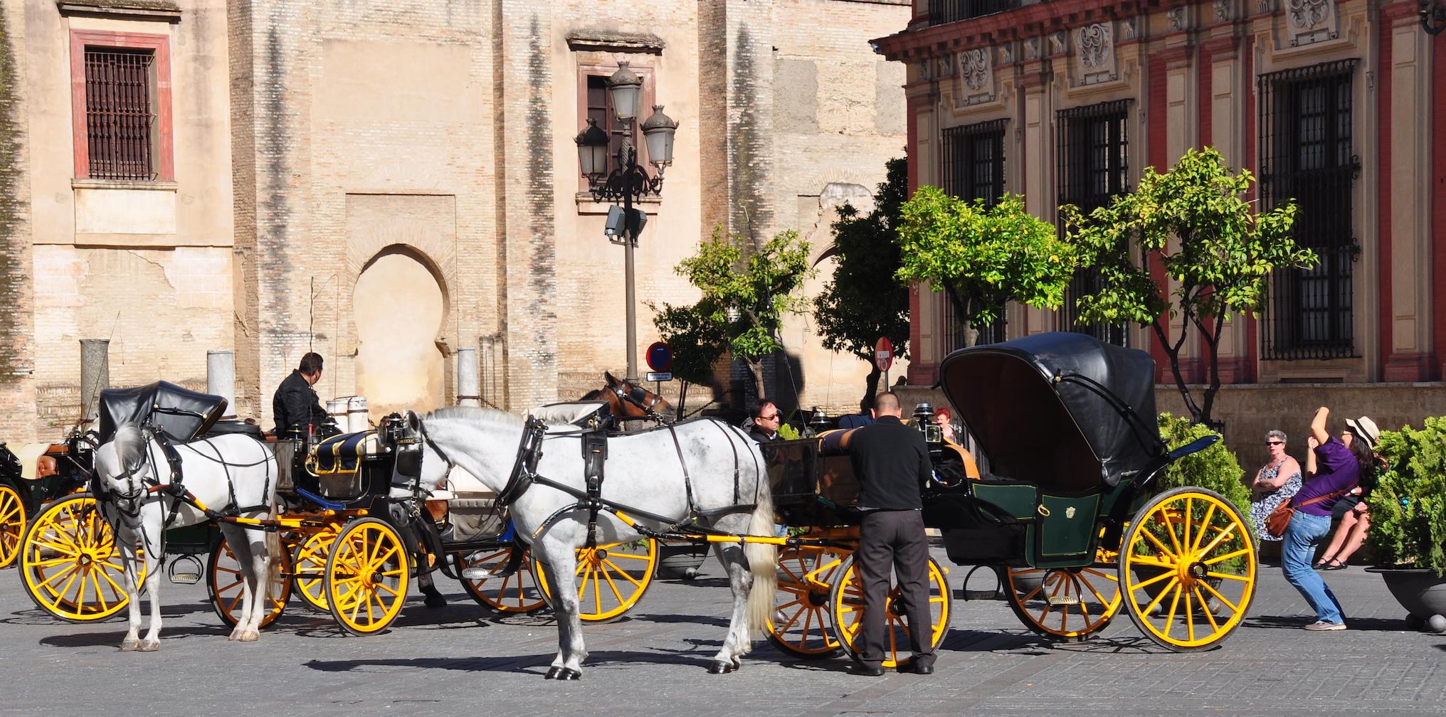 Seville horses on Al Andalus tour
