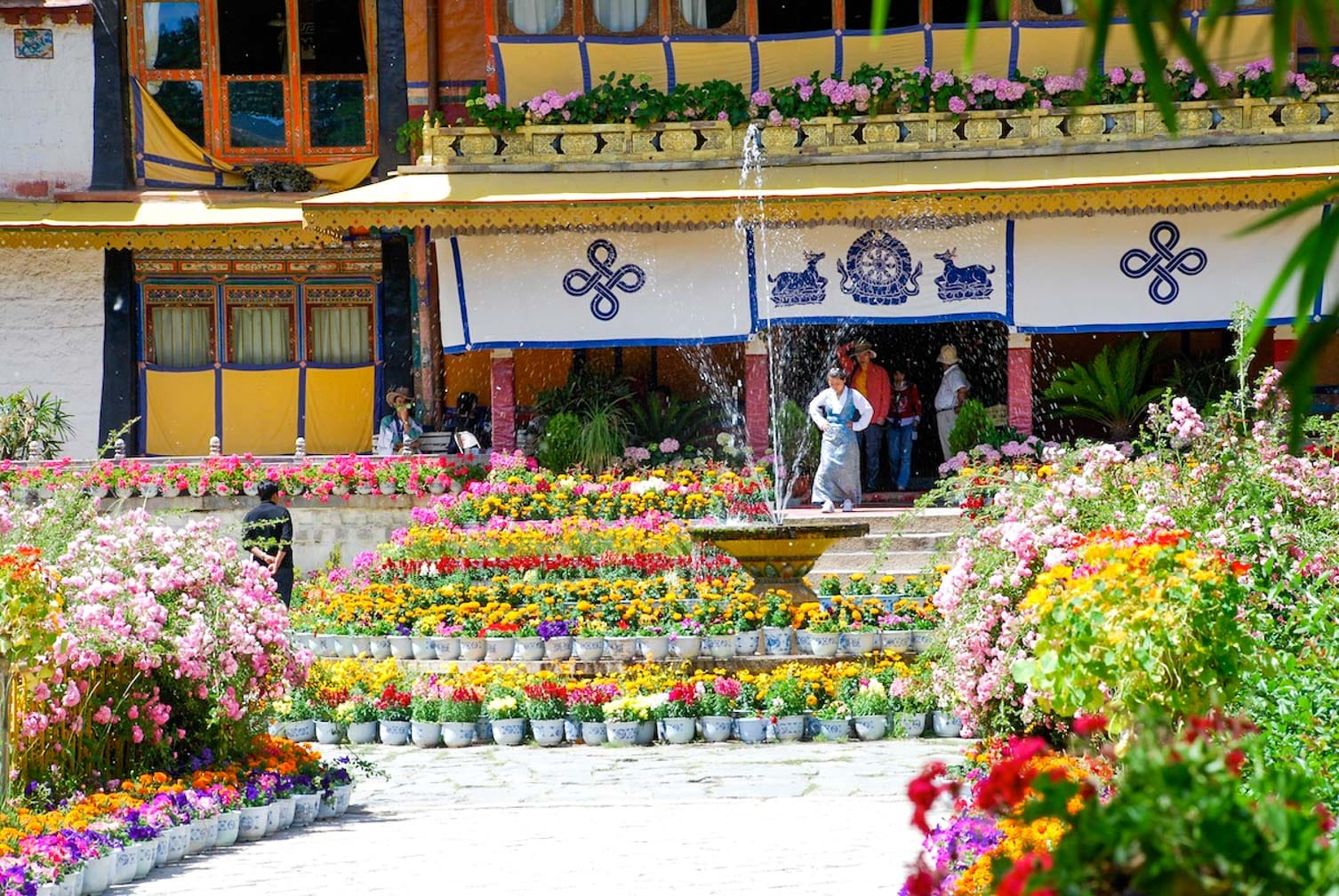 Flowers in Norbu on the China and Tibet Rail Discovery joureny