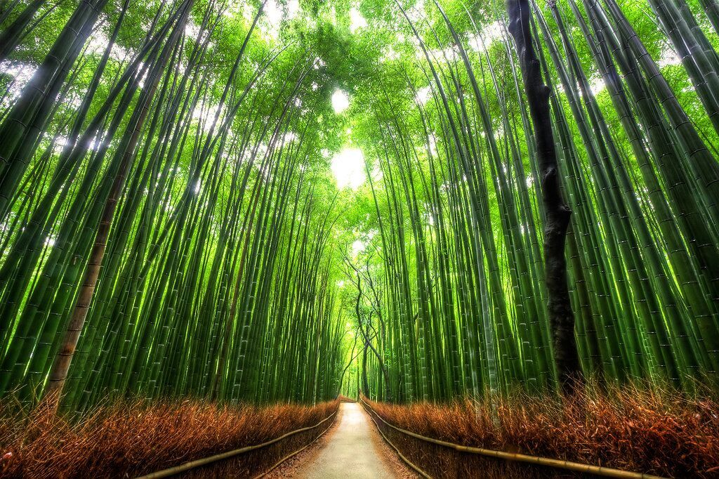 KYOTO Bamboo_Forest