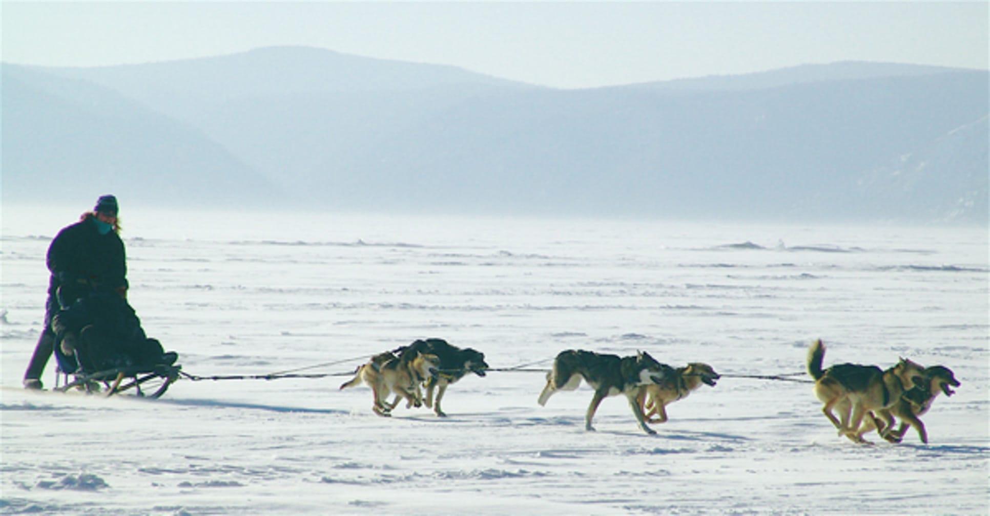 Dog sledding on the Trans-Siberian Winter Wonderland by Steam journey