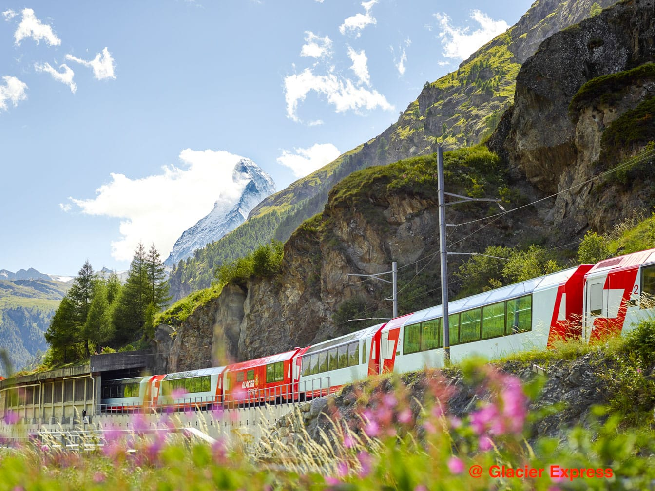 Glacier Express train going past a field of flowers